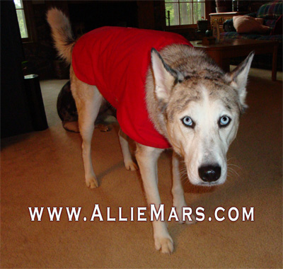 Dog wearing Storm Defender dog cape